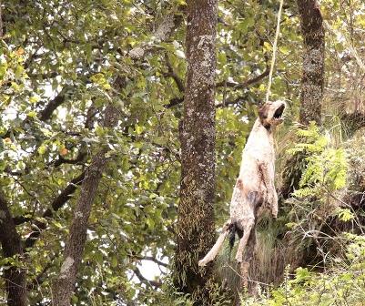 Ataca de nuevo psicópata mata perros en Contla