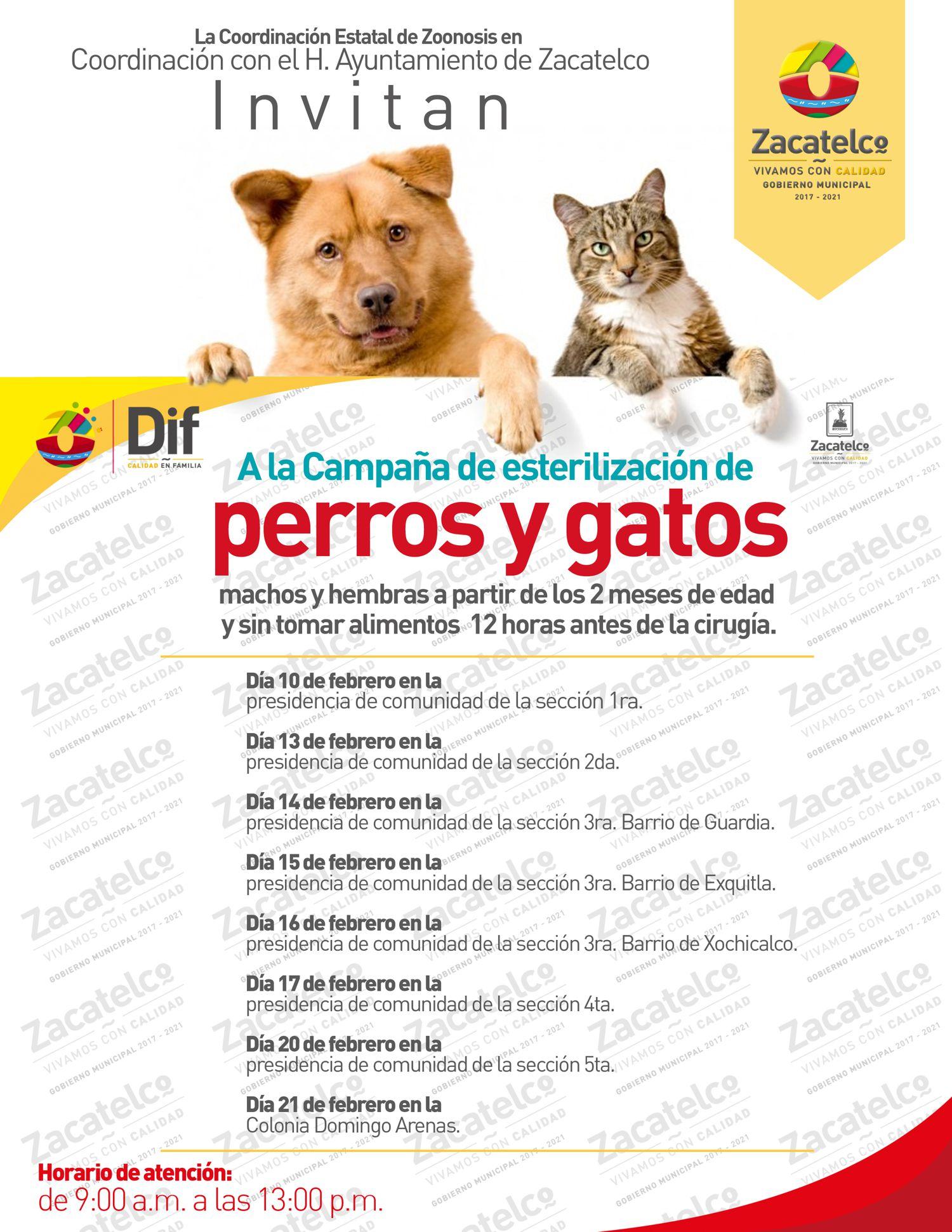 Ayuntamiento frena proliferación de perros y gatos con esterilización