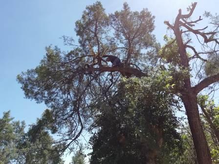 Con la poda de árboles prevenimos accidentes a transeúntes
