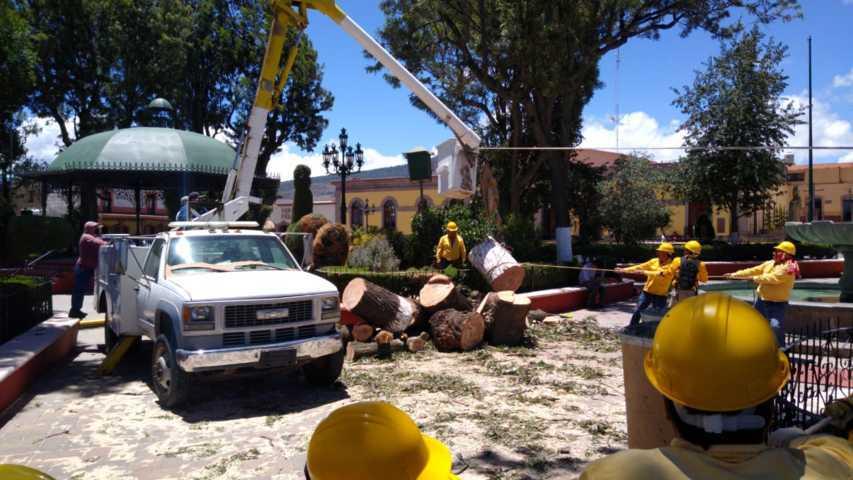 Realiza Tlaxco poda de árboles para evitar riesgos a transeúntes