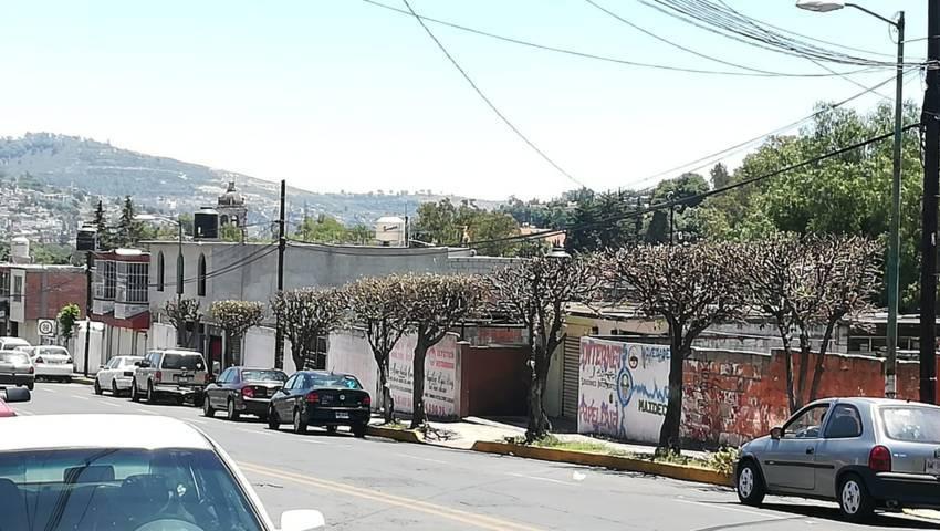 Realiza ayuntamiento de Tlaxcala poda de árboles en avenida Independencia