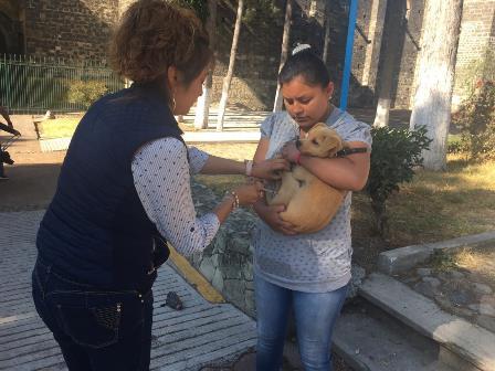 Aplica comuna capitalina más de 5 mil vacunas a mascotas