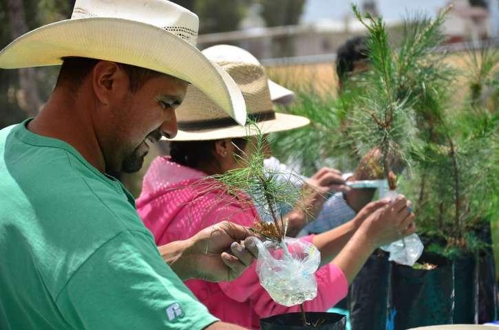 Alcanza 63% sobrevivencia de árboles plantados en este sexenio