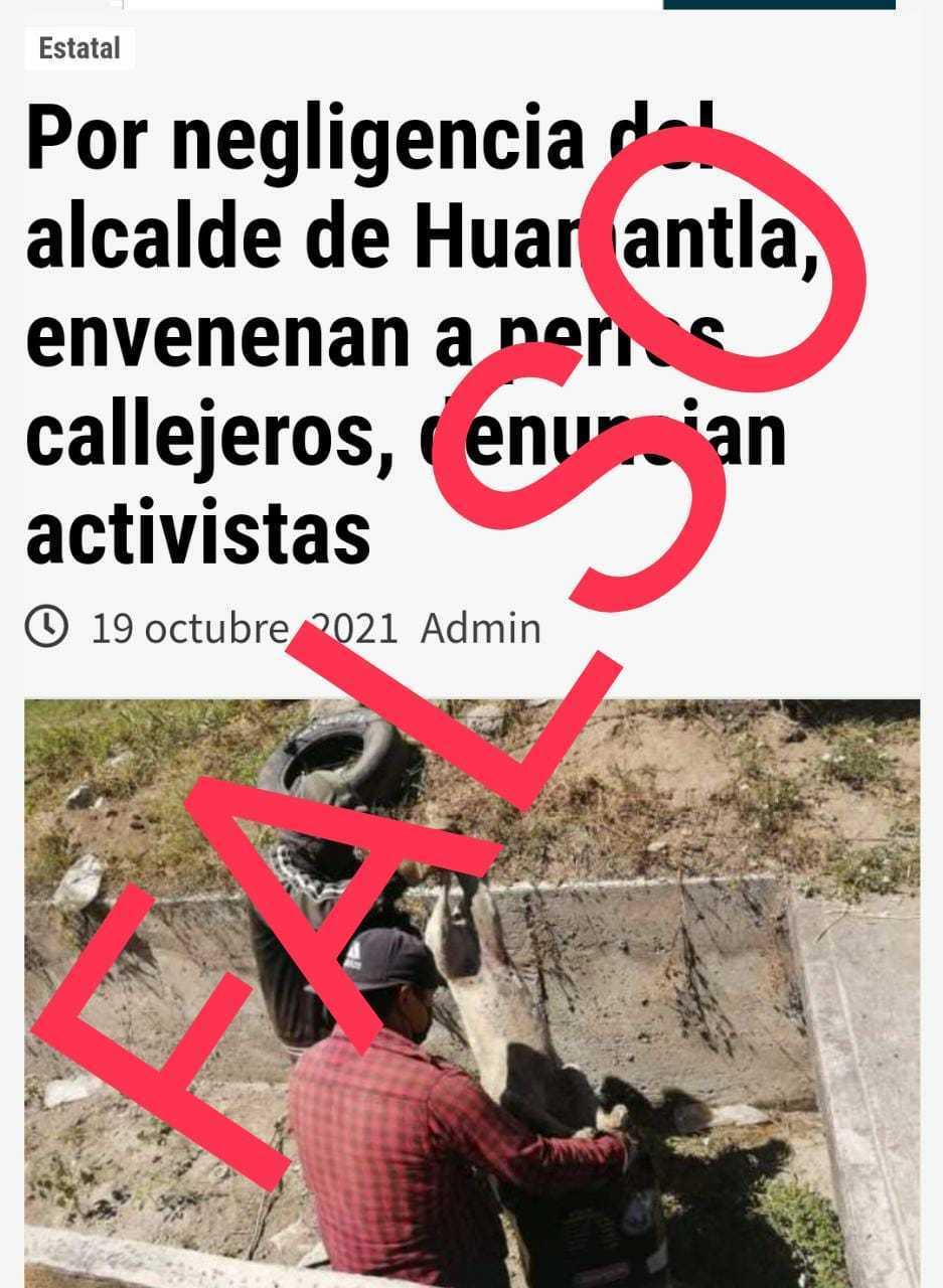 Falso que el Gobierno de Huamantla autorice envenenamiento de perros callejeros
