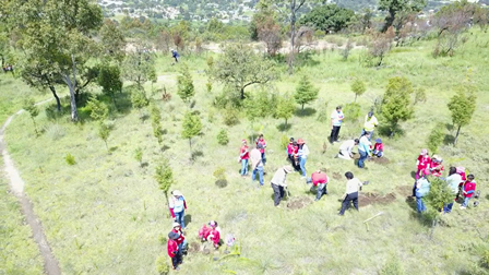 Reforestan el cerro de San Andrés en Tzompantepec