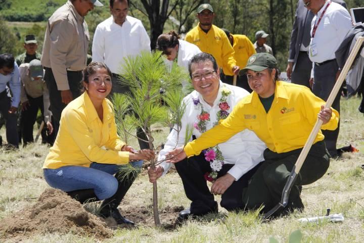 Cuidar bosques y su efecto en la naturaleza el compromiso del gobierno