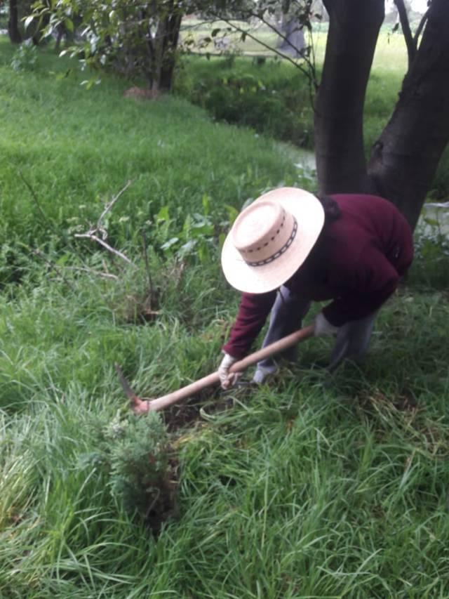 Continúa Gobierno de Xicohtzinco reforestación