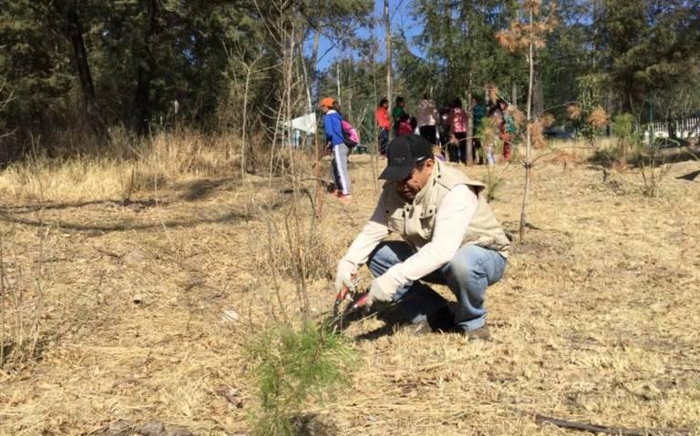 """Se organizan ciudadanos para reforestar """"La Ocotera"""""""