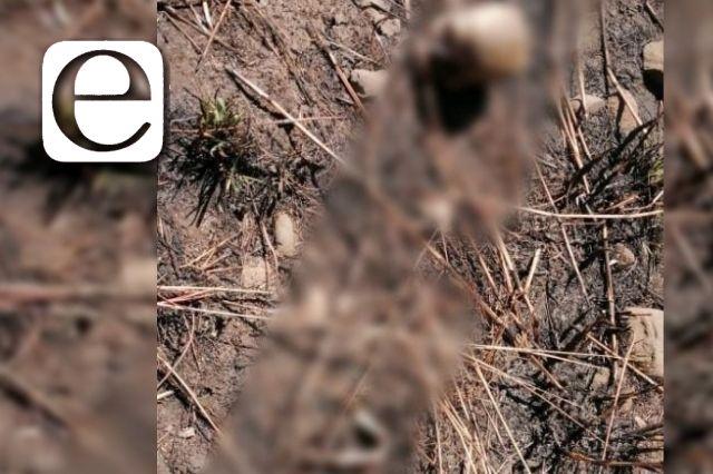 Localizan restos humanos en una barranca de San Pablo del Monte