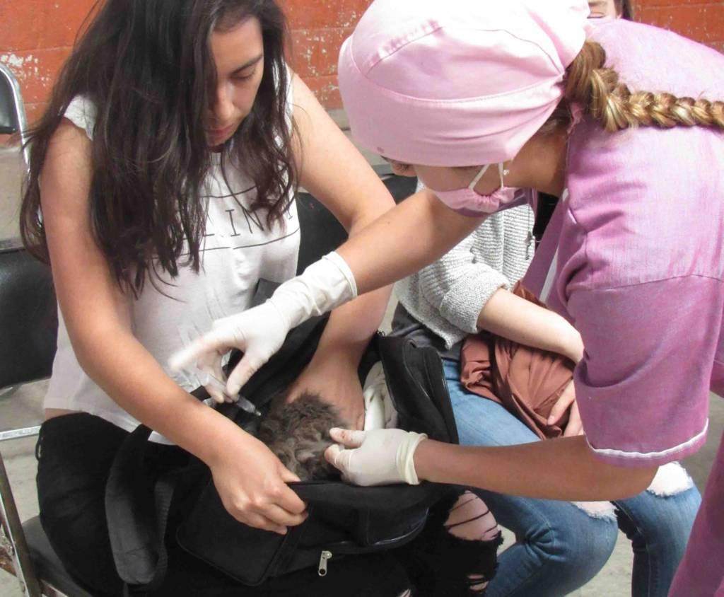 Inicia alcaldía capitalina acciones de esterilización canina y felina