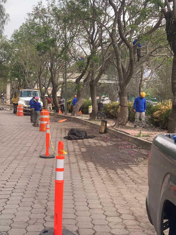 Se terminó la larga espera, terminan saneamiento de Jacarandas en la capital