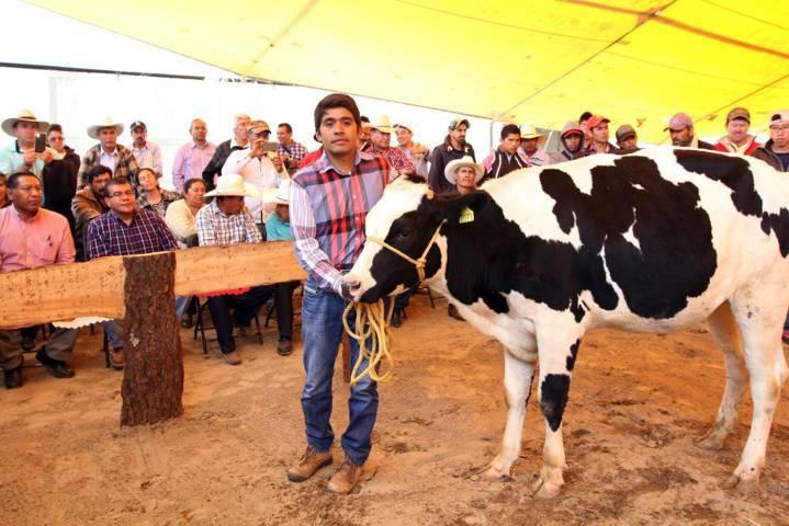 Presenta Sefoa resultados del programa tecnomóvil de bovinos de leche