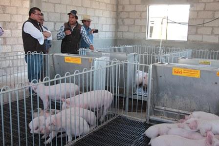 Verifica Sefoa apoyos que reciben ganaderos de Huamantla y Atltzayanca