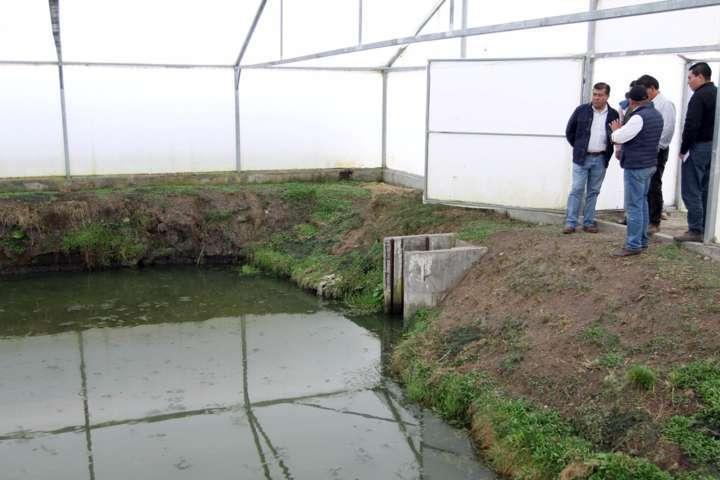 Inicia SEFOA ciclo reproductivo de carpa en Atlangatepec