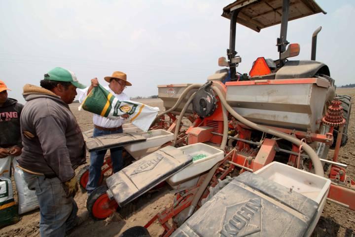 Supervisa Sefoa trabajos de siembra en Huamantla