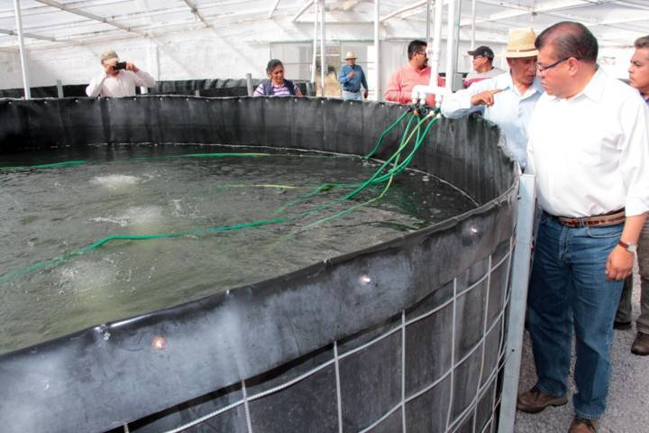 Entrega Sefoa apoyos para fortalecer acuacultura en el estado