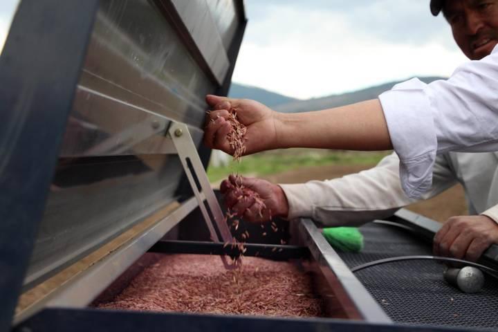 Invierte Gobierno del Estado más de 10 mdp en semillas para productores agrícolas