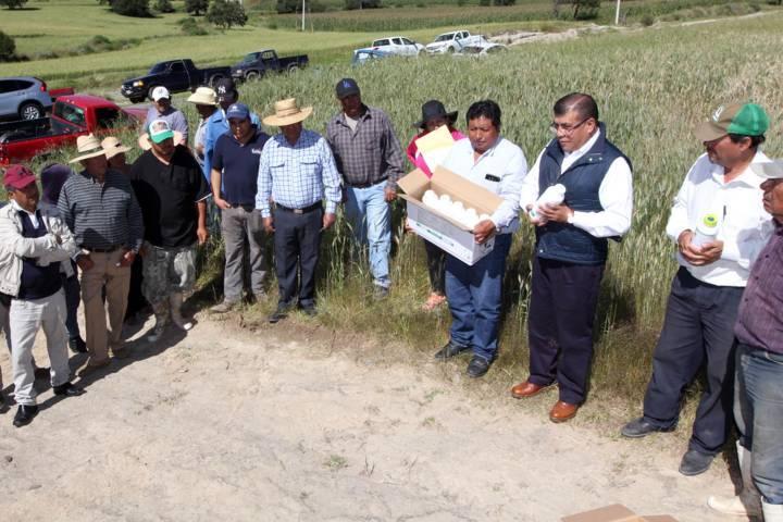 Entrega SEFOA apoyo para combatir plagas en cultivos de trigo