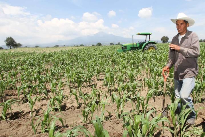 Seguro agrícola funciona de manera transparente y con apego a la norma: SEFOA