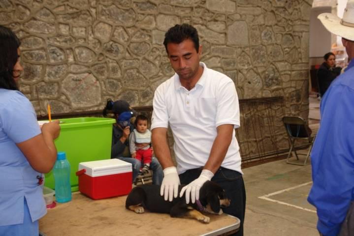 Brinda SESA servicio de esterilización de mascotas en municipios