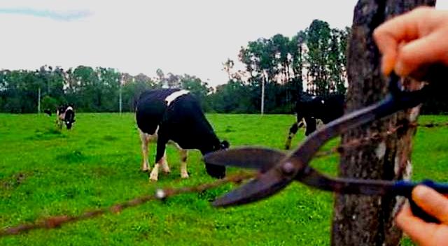 Roba vacas pegan golpe a ITAT