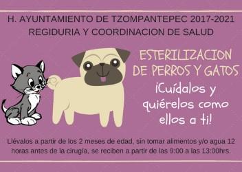 Ayuntamiento de Tzompantepec invita a la ciudadanía a esterilizar a sus mascotas