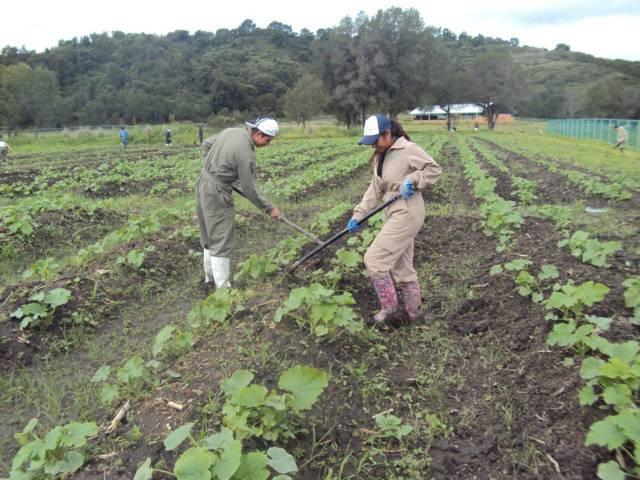 Imparte Universidad Politécnica de Tlaxcala Región Poniente Ingeniería en Agrotecnología