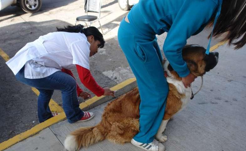 Esteriliza SESA perros y gatos en los 60 municipios