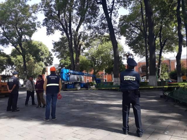 Atienden árbol fracturado por caída de rayo en la capital