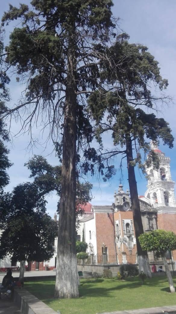 Anuncian el retiro de tres árboles en el Parque Hidalgo de Chiautempan