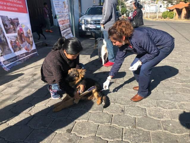 Continúa comuna capitalina con servicios de vacunación antirrábica canina y felina