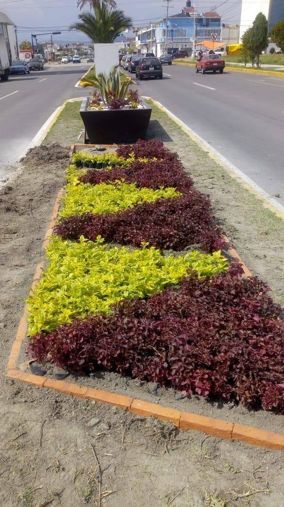 5 mil plantas embellecerán camellones de Apizaco