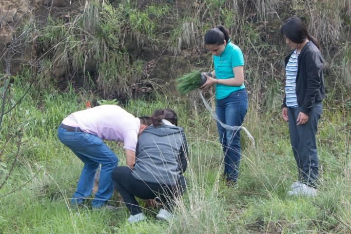 50 Mil árboles plantará el municipio Sarapero