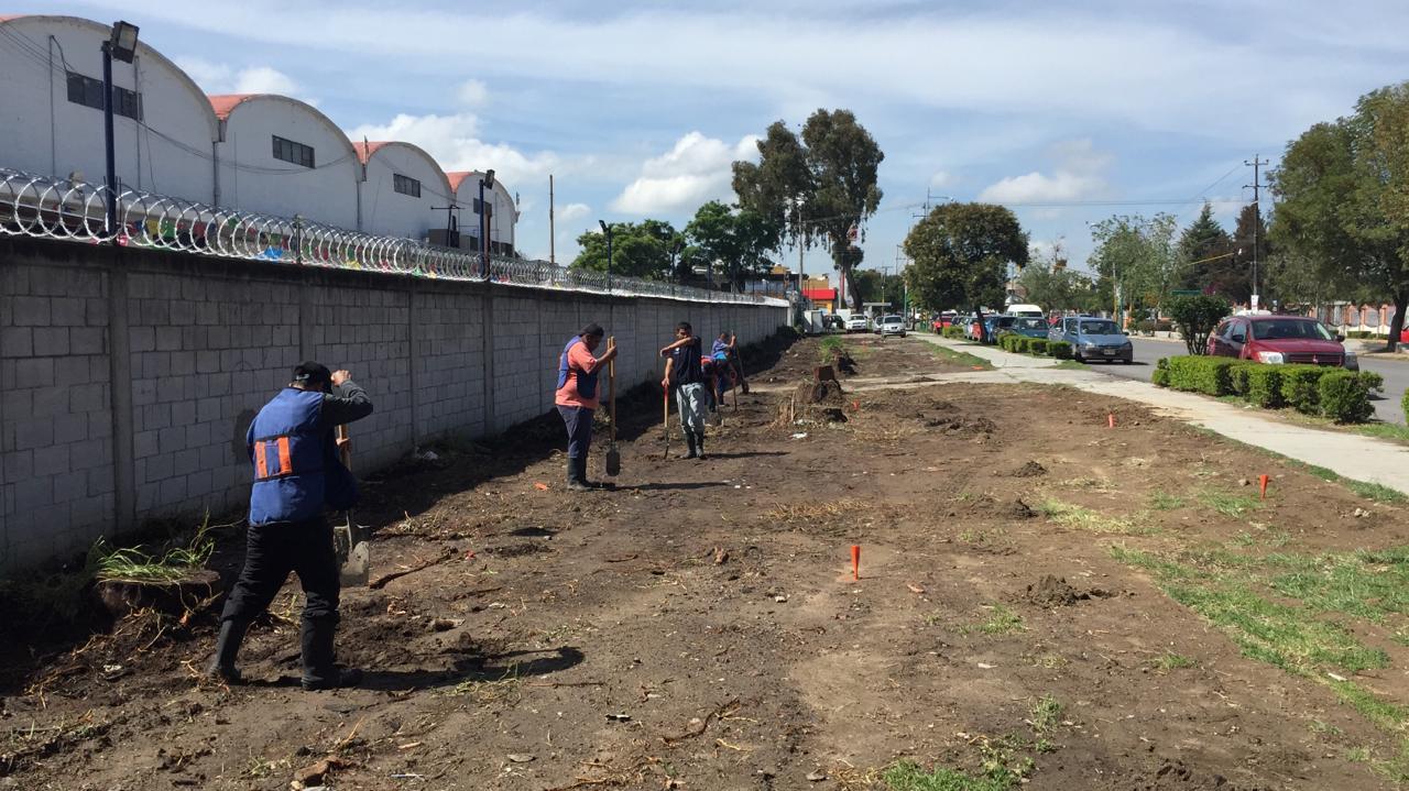 Ayuntamiento recupera área verde con faena de limpieza y siembra de 60 árboles