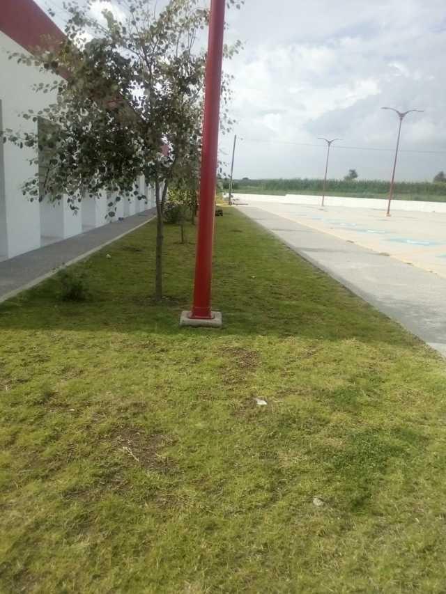 Llevan a cabo trabajos de mantenimiento a jardines a hospital regional de SPM