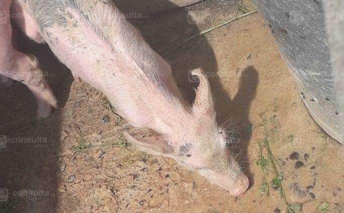 Covarrubias también entregó animales moribundos en Zacualpan