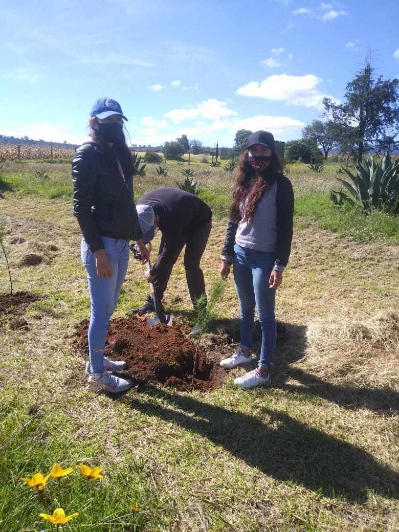 Reforestan con flora endémica el área perimetral del Museo de Sitio de Zultépec-Tecoaque