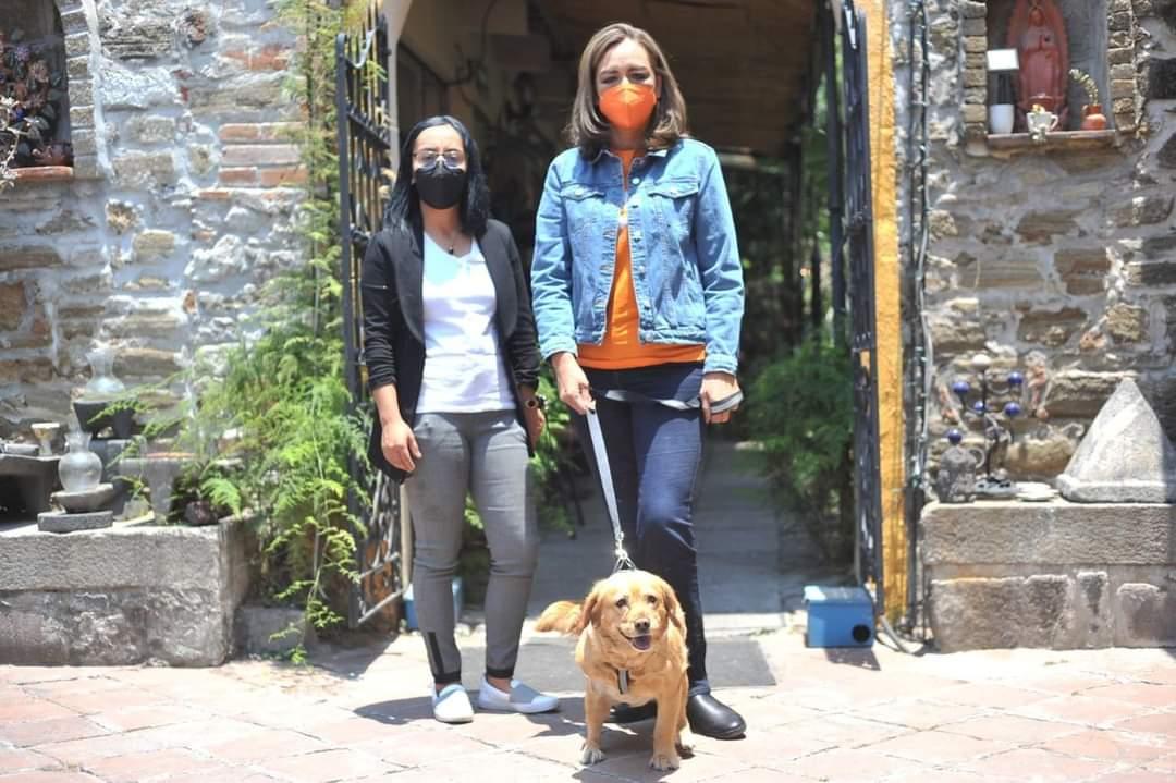 Anuncia Eréndira Jiménez 5 compromisos para la Agenda de Bienestar Animal