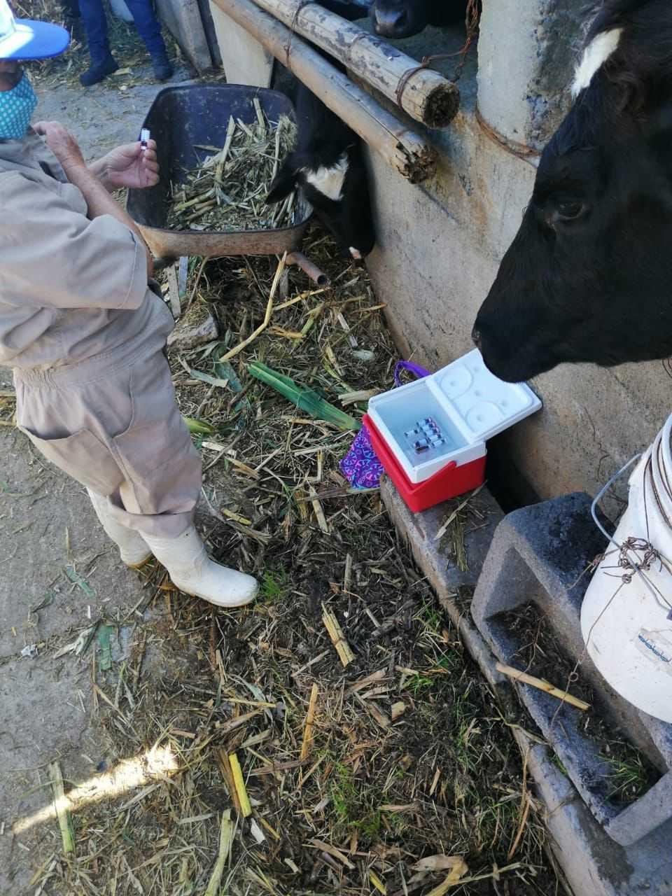 Arranca con éxito campaña de vacunación de ganado en Apizaco