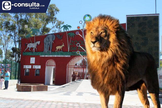 León del zoológico del Altiplano ataca a mujer de 50 años